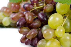 Sweet fresh green grapes Stock Photography
