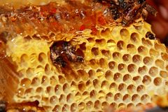 Sweet fresh honey and honeybees Royalty Free Stock Images