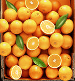 Sweet fresh and juicy oranges rich in vitamins Royalty Free Stock Image