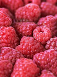 Sweet fresh raspberries Royalty Free Stock Images
