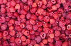 Sweet fresh raspberries closeup. Closeup detail of fresh raspberries freshly picked Stock Photos