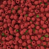 Sweet fresh raspberries closeup Royalty Free Stock Image