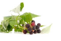 Sweet fresh raspberry fruit with green leaf Stock Photos