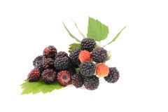 Sweet fresh raspberry fruit on white. Sweet fresh raspberry fruit  with green leaf Stock Image