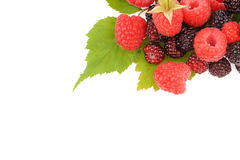 Sweet fresh raspberry fruit on white. Sweet fresh raspberry fruit  with green leaf Royalty Free Stock Photos
