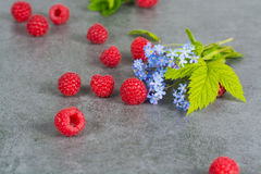Sweet fresh raspberry with leaves, on grey background, copy spac. E Stock Image