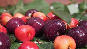 Sweet fresh red and yellow cherries with water drops and green leaves. Ripe fruit concept stock video footage