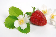 Sweet fresh strawberry Royalty Free Stock Image
