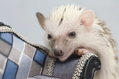Sweet fun cute hedgehog baby Royalty Free Stock Images