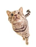 Sweet funny kitten Royalty Free Stock Photo