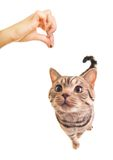 Sweet funny kitten Stock Images