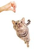 Sweet funny kitten Royalty Free Stock Photos