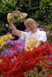 Sweet garden. Stock Images