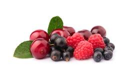 Sweet garden berries Stock Images