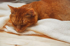 Sweet ginger cat sleeping on a blanket Stock Photos