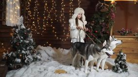 Sweet girl cheerfully posing in the snow with two dogs Husky stock video