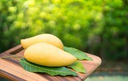 Sweet golden mango on green garden. Barracuda mango with green leaf Stock Photo