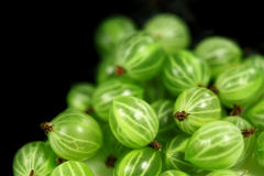 Sweet    gooseberries Royalty Free Stock Image
