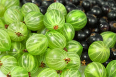 Sweet  gooseberries and blackberr Stock Photos
