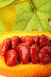 Sweet gourd seeds Stock Images
