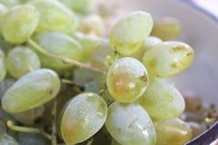 sweet grains graip stock images