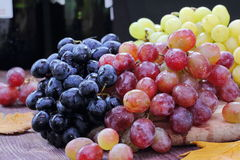 Sweet grape of different kinds Stock Photography
