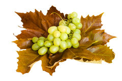 Sweet grape on the leafs Stock Image