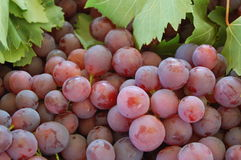 Sweet grapes Royalty Free Stock Image