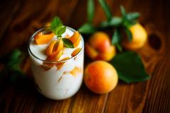 Sweet Greek yogurt with apricots Royalty Free Stock Image