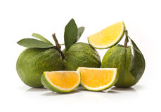 Sweet green Oranges fruit Royalty Free Stock Image