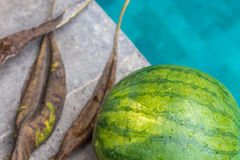 Sweet green organic watermelon outside on a blue swimming pool background. Tropical Bali island, Indonesia. Stock Photo