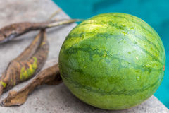 Sweet green organic watermelon outside on a blue swimming pool background. Tropical Bali island, Indonesia. Stock Photos