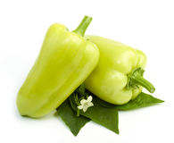Sweet green peppers Stock Photos