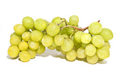 Sweet green seedless grapes on vine Stock Photos