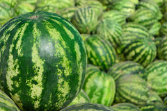 Sweet green watermelons Royalty Free Stock Photography