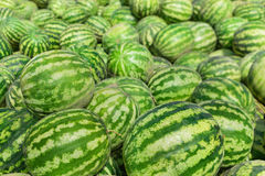 Sweet green watermelons Stock Image