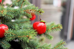 Sweet greeting card. Apple on the tree. Greeting card. Winter Stock Photos