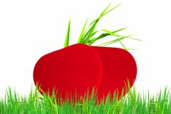 Sweet heart on green grass Royalty Free Stock Image