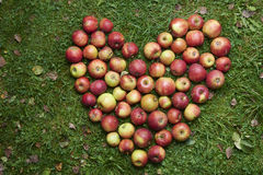 Sweet Heart Shape Made Of Apples Royalty Free Stock Images