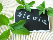 Sweet herb with nameplate Royalty Free Stock Images