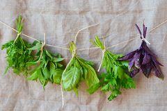 Sweet herbs Royalty Free Stock Image