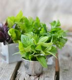 Sweet herbs Stock Photography
