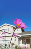 Sweet home and flower. Stock Photo