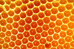 Sweet honey comb background Stock Photos