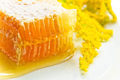 Sweet honeycomb with honey Stock Photos