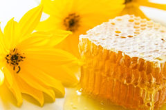 Sweet honeycomb with honey Royalty Free Stock Photo
