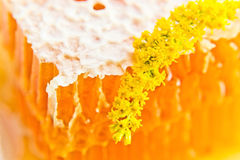Sweet honeycomb with honey Stock Photo