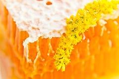 Sweet honeycomb with honey Stock Photo