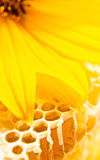 Sweet honeycomb with honey Royalty Free Stock Image
