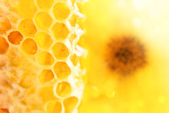 Sweet honeycomb with honey Royalty Free Stock Photography